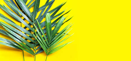 Tropical palm leaves on yellow background. Copy space