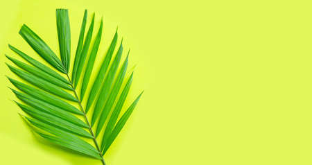 Tropical palm leaves on green background. Enjoy summer holiday concept. Copy space