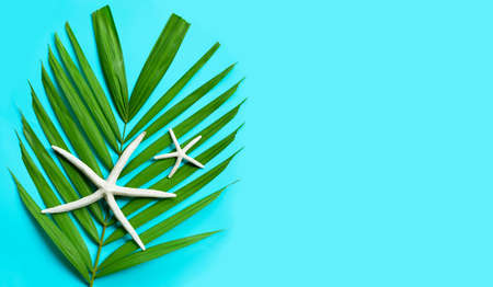 Starfish on tropical palm leaves on orange  background. Enjoy summer holiday concept.  Copy space