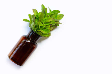 Fresh holy basil  leaves in medicine bottle on white background. Top view
