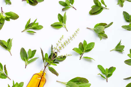 Fresh holy basil  leaves with essential oil bottle on white background. Top view Banque d'images