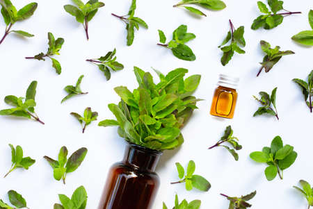 Fresh holy basil leaves with essential oil bottle on white background.