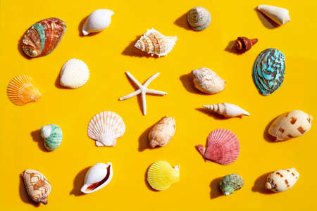 Composition of starfish and exotic sea shells on yellow background.