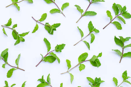 Fresh mint leaves on white background. Top view