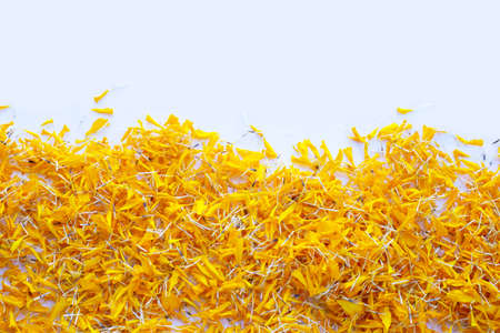 Petals of marigold flower on white background.
