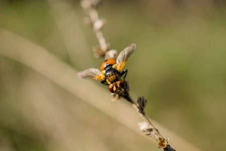 winged: Orange winged beetle like a ladybug on the plant