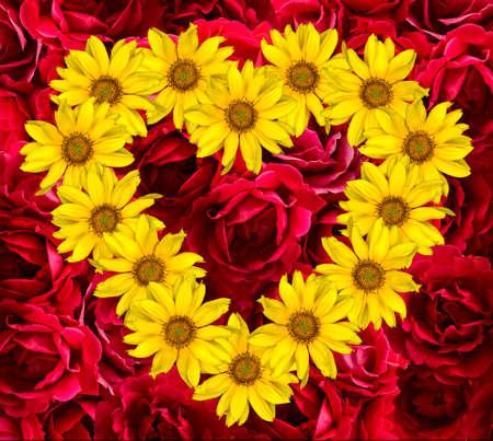 Heart of yellow flowers of decorative sunflowers helinthus and heart of yellow flowers of decorative sunflowers helinthus and red rose background stock photo 41746626 mightylinksfo