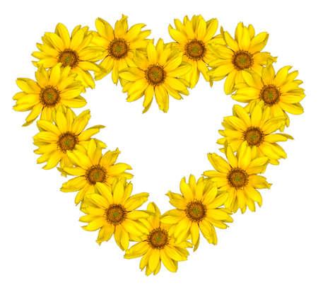 girasol: Corazón de flores de color amarillo de los girasoles decorativos Helinthus aislado en blanco Foto de archivo