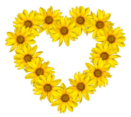 sunflowers: Heart of yellow flowers of decorative sunflowers Helinthus isolated on white Stock Photo