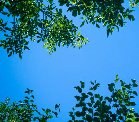 blue green background: Green tree leaves against blue sky background