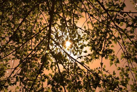 feuilles arbres: Les feuilles des arbres dans les rayons de soleil fond rouge filtr�es