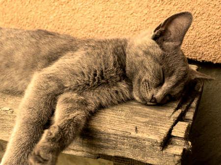 gato gris: Dormir gris cansado joven gato en banco calentar filtra Foto de archivo