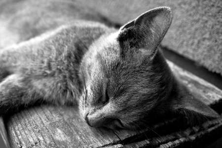 gray cat: Young tired gray cat sleeping on bench black and white Stock Photo