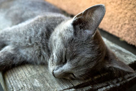 gray cat: Young tired gray cat sleeping on bench Stock Photo