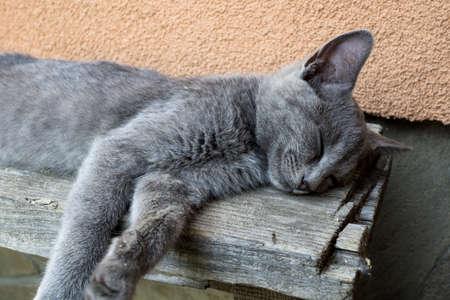 gato gris: Dormir gris cansado joven gato en el banco Foto de archivo