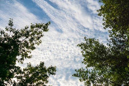 groene boom: Dark contour of green tree leaves against blue sky background Stockfoto