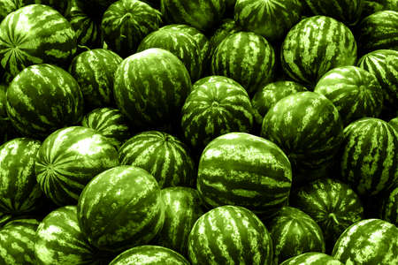 screensaver: Screensaver from heap of green watermelons filtered