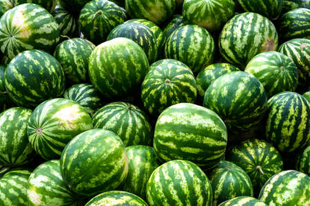 screensaver: Screensaver from heap of green watermelons Stock Photo