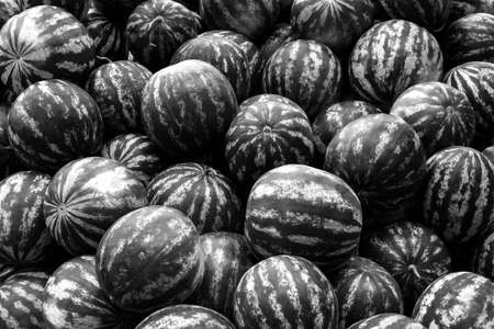 screensaver: Screensaver from heap of watermelons black and white