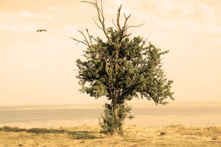 prideful: Ancient oak tree on mountain over sea warm filtered
