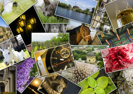 Mosaic collage with pictures of different places, landscapes, flowers, insects, objects and animals shot by myself
