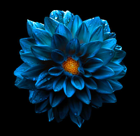 Surreal dark chrome blue flower dahlia macro isolated on black Imagens