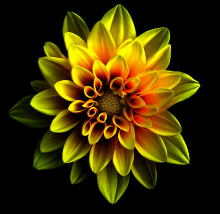 Surreal dark chrome gold and red flower dahlia macro isolated on black
