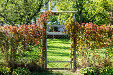wicket: Metal mesh fence with a wicket overgrown with bushes