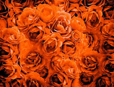 vignetting: Bush of orange rose flowers background high contrasted with vignetting effect Stock Photo