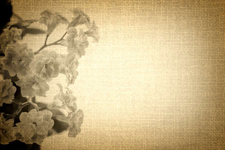 vignetting: Flowers of Kalanchoe plant on old brown cloth texture vintage styled high contrasted with vignetting effect