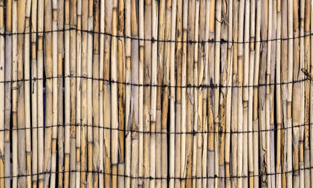 bound: Vector texture of wall of bound bamboo. Vector illustration