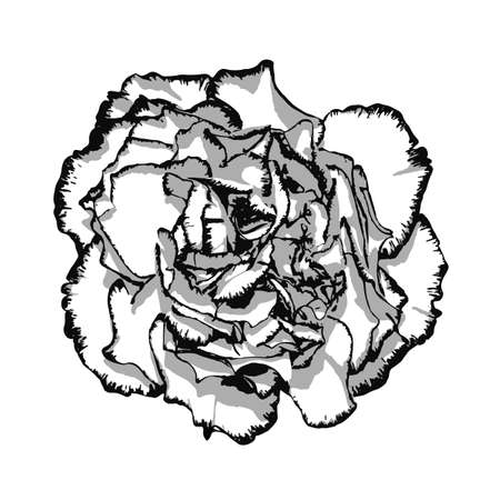 clove: Clove flower with edging black and white. Vector illustration