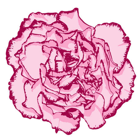 clove: Clove flower with rose petals and pink edging. Vector illustration