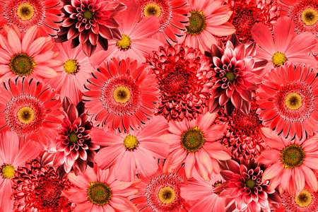 kiss love: Vintage background with red flowers collage mix gerbera, chrysanthemum, dahlia, primula, decorative sunflower