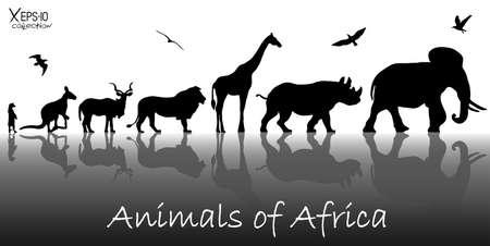animales del zoologico: Siluetas de animales de África: suricata, canguro, kudu antílopes, leones, jirafas, rinocerontes, elefantes y aves con reflexiones de fondo. Ilustración vectorial
