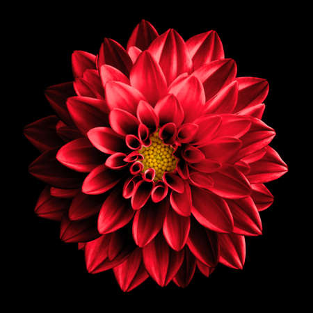 Surrealista oscura flor roja dahlia macro aislados en negro