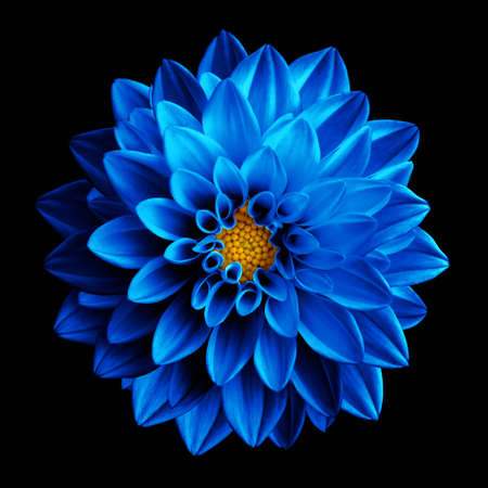 Surreal dark blue flower dahlia macro isolated on black