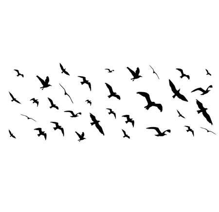Flying Birds silhouettes sur fond blanc. illustration