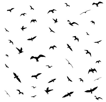 Fliegende Vögel Silhouetten auf weißem Hintergrund.