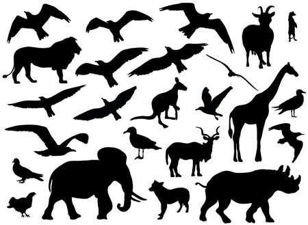 hornbill: Set of animals silhouettes on white background. Vector illustration