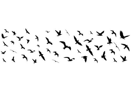 migratory: Flying birds silhouettes on white background. Vector illustration