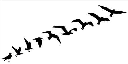 silueta del pájaro vuelan de concepto. ilustración vectorial Ilustración de vector