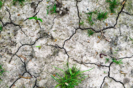 crannied: Texture of grey withered earth with cracks and green grass HDR effect Stock Photo