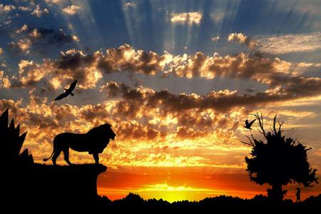 arbol p�jaros: Selva con las monta�as, los �rboles viejos, aves y le�n de oro Meerkat en el fondo del atardecer nublado Foto de archivo