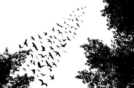 migrating: Bird wedge and trees silhouettes on white background. illustration