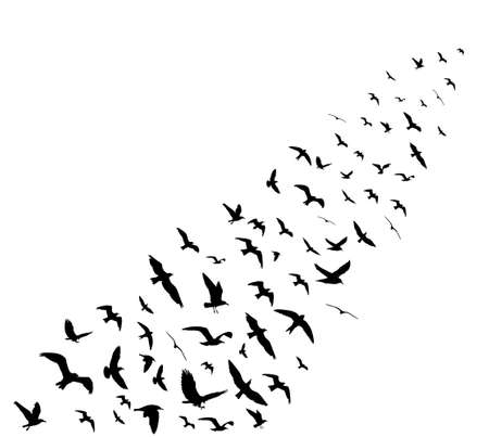 Bird wedge silhouettes on white background. illustration