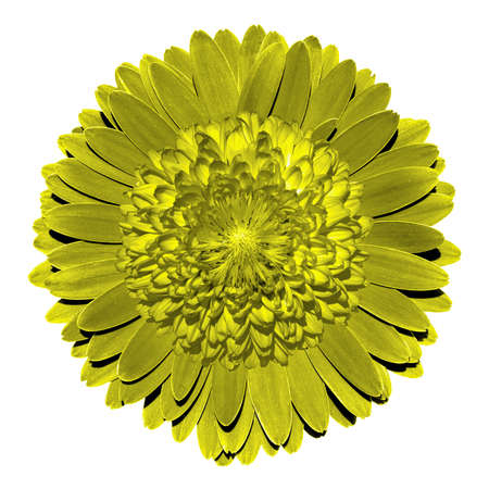 surrealistic: Surrealistic fantasy yellow flower macro isolated on white Stock Photo