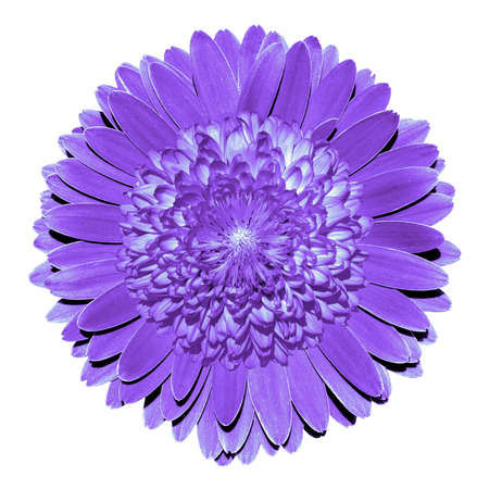 surrealistic: Surrealistic fantasy violet flower macro isolated on white Stock Photo