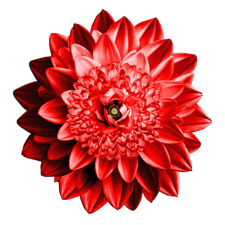 surrealistic: Surrealistic fantasy red flower macro isolated on white