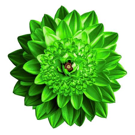 surrealistic: Surrealistic fantasy green flower macro isolated on white